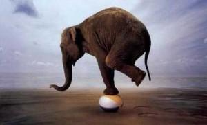 balanceolifant